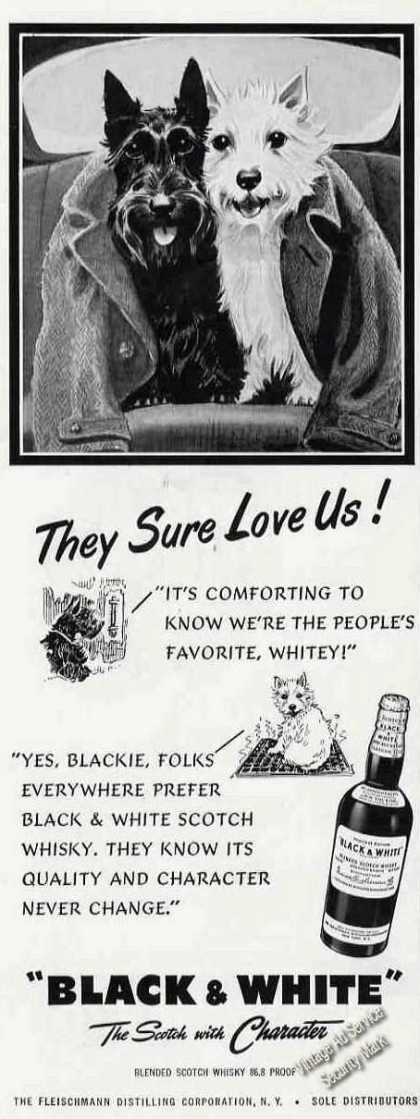 "B&w Scotch Terrier/westie ""They Sure Love Us!"" (1953)"