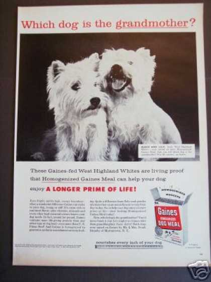 West Highland White Dog Photo Gaines (1956)