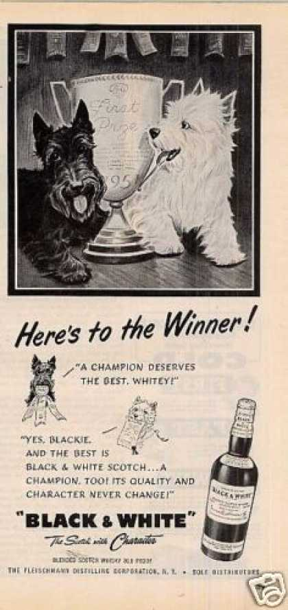 B&amp;w Ad &quot;Here&#8217;s To the Winner!&quot; Westie/scottie (1951)