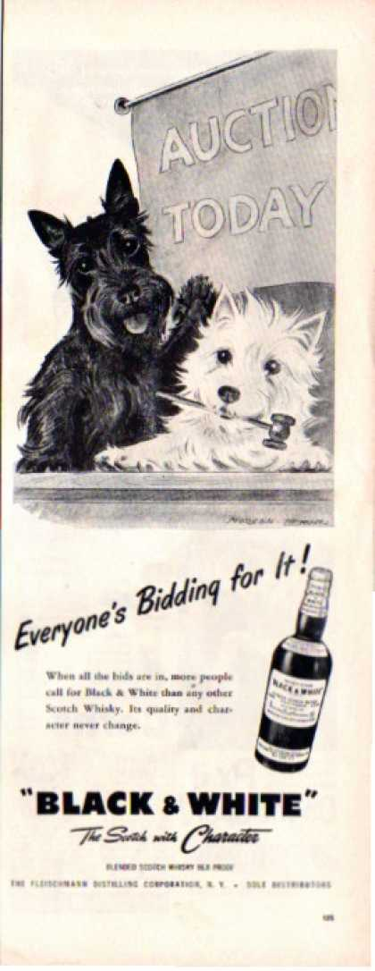 Black & White Scottish Terrier Dennis Auction (1955)