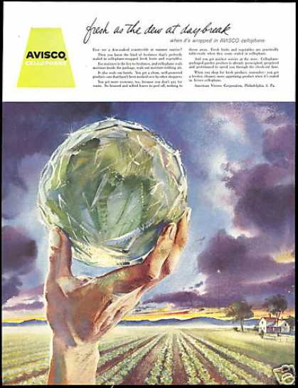 Lettuce Farm Field Cellophane Avisco (1956)
