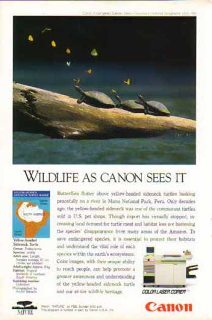 Canon Color Laser Copier – Yellow Headed Sideneck Turtle (1994)