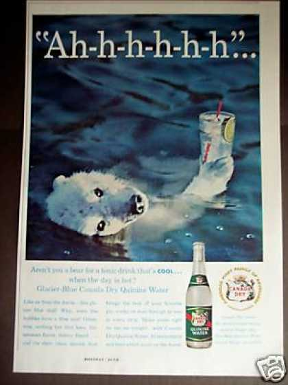 Cool Polar Bear Art Canada Dry Quinine Water (1960)