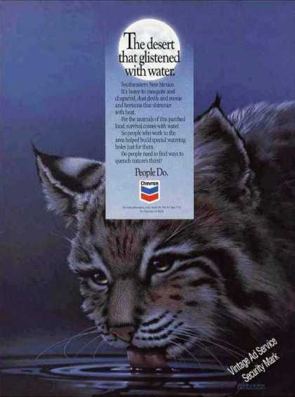 Nice Bobcat Art Collectible Chevron (1993)