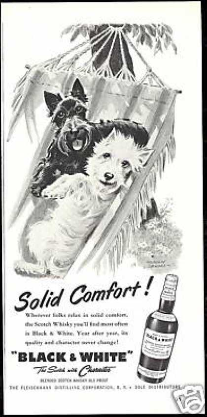 B&W Scotch Westie Scottish Terrier Dog Comfort (1956)