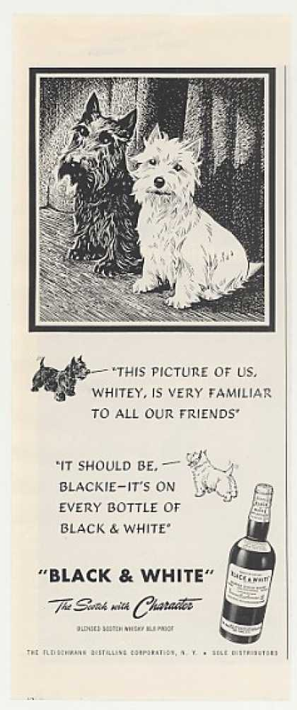 Black & White Scotch Blackie Whitey Dogs (1949)