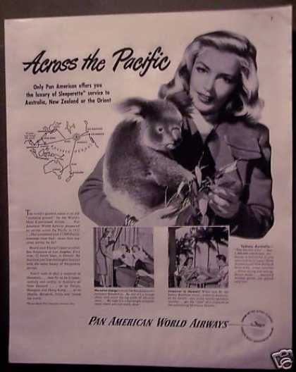 Pan America Airline Koala Bear (1948)