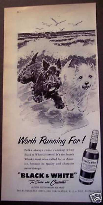 Black & White Scotch Whisky Dogs (1956)