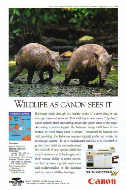 Canon Color Laser Copier – Babirusa Wild Hog (1993)