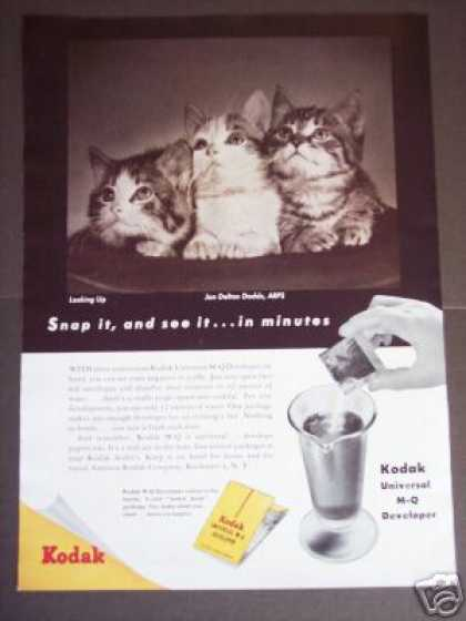 Kodak M-q Film Developer Kittens Photo (1947)