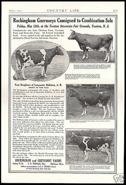 Rockingham Greycoat Farms Guernsey Cow Sale (1927)