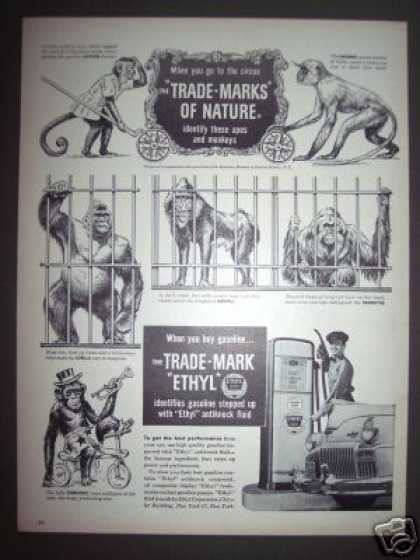 Circus Monkeys Ethyl Gas Gasoline (1948)