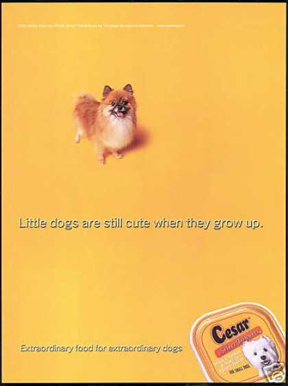 Cute Pomeranian Dog Cesar Select Dinners (2001)