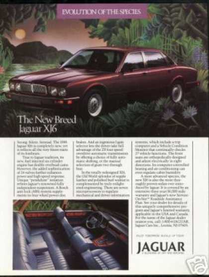 Jaguar XJ6 The New Breed Car Photo (1988)