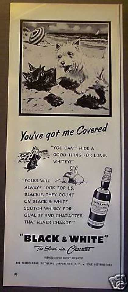 Blackie & Whitey Dogs Black & White Whisky (1953)