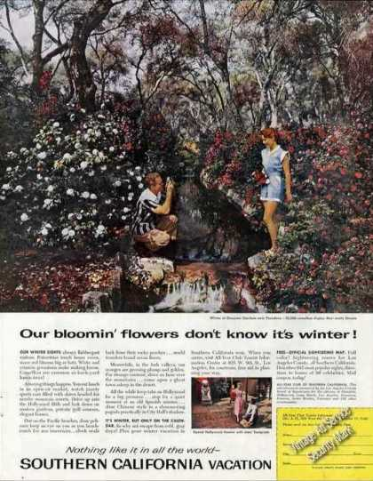 Winter at Descanso Gardens Near Pasadena Photo (1957)