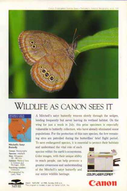 Canon Color Laser Copier – Mitchell's Satyr Butterfly (1993)