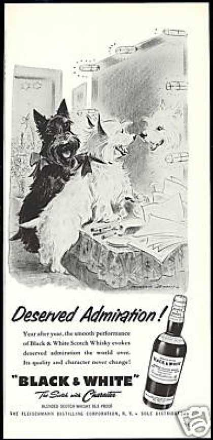 Scottish Terrier Westie Admiration B&W Scotch (1957)