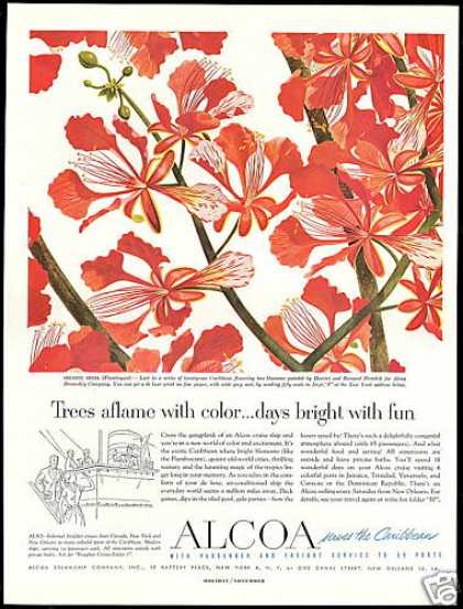 Flamboyant Flower Pertchik Alcoa Steamship Co (1953)