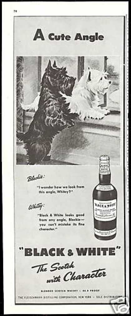 Cute Scottish Terrier Westie B&amp;W Scotch (1947)