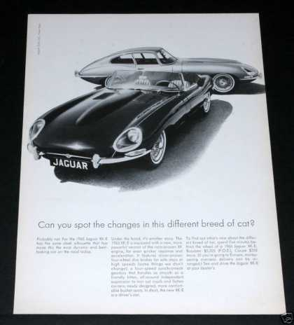 65 Jaguar Xk-e, Roadster, Coupe (1964)