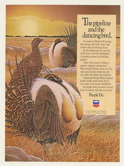 West Wyoming Sage Grouse Braldt Bralds Chevron (1987)