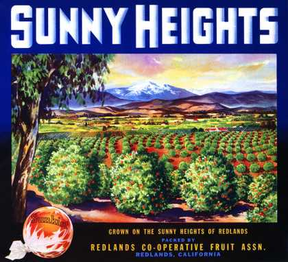 Sunny Heights Oranges, c. s (1930)