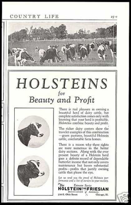 Holstein Friesian Assoc America Co Cattle (1926)
