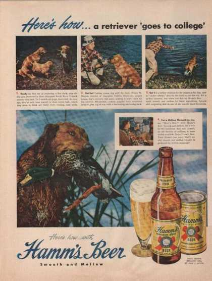 Retriever Goes To College Hamms Beer (1949)