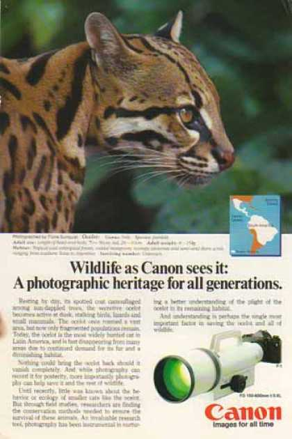 Canon FD 150-600mm f/5.6L Lens – Ocelot Cat (1986)
