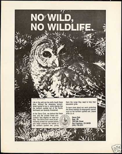 Northern Spotted Owl Photo Sierra Club (1991)