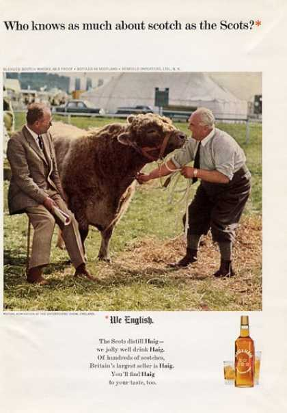 Haig & Haig British Scotch Cow Oxforshire (1965)