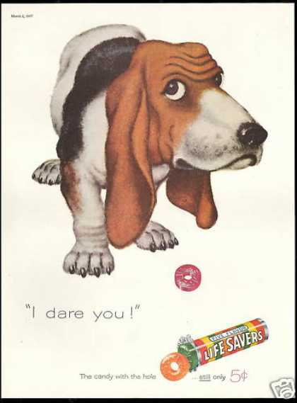 Basset Hound Dog Dare You Life Savers Candy (1957)