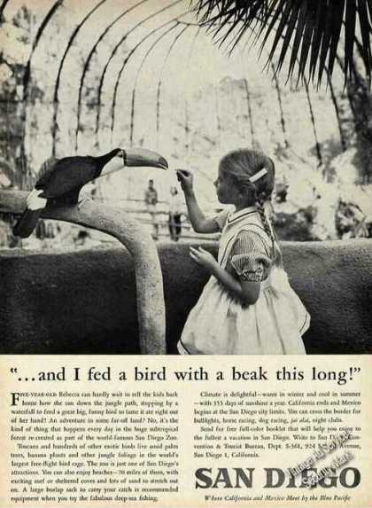 San Diego Zoo Little Girl Feeding Toucan Photo (1961)