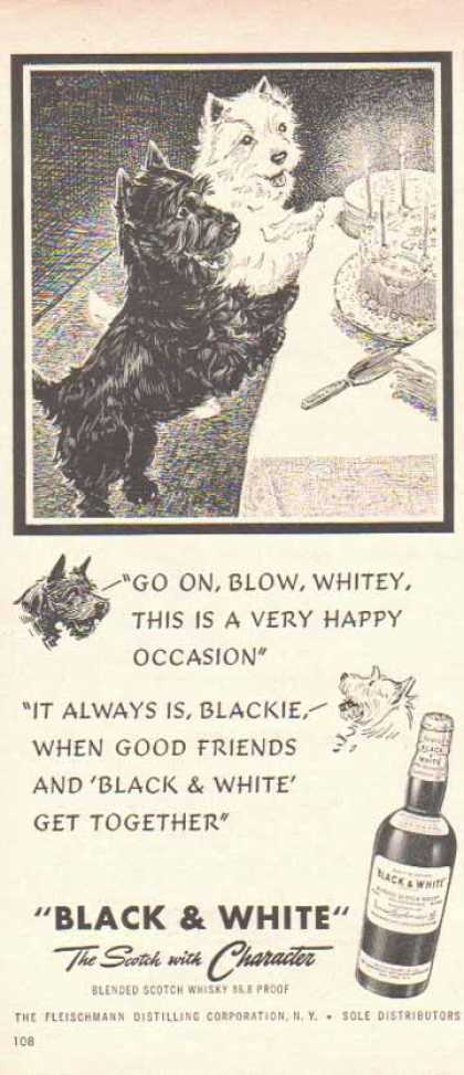 Black & White Scotch Whiskey Scottish Terriers – Birthday Dogs (1949)