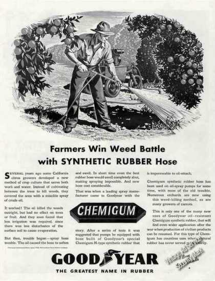 Farmers Win Weed Battle Ca Citrus Goodyear (1943)