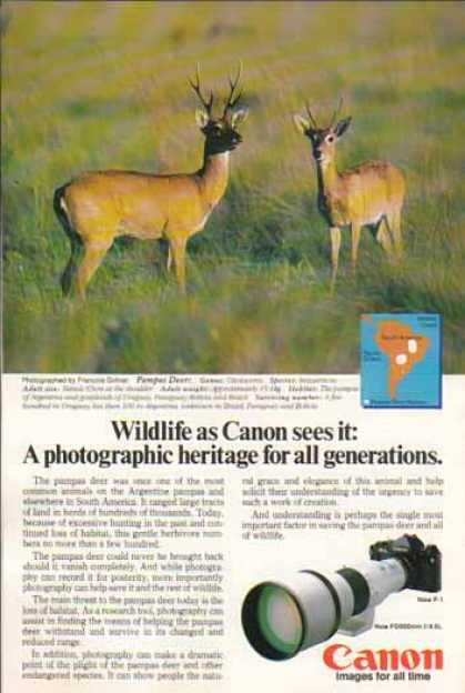 Canon FD500mm f/4.5L – Pampas Deer (1981)