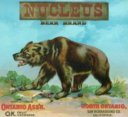 North Ontario, California, Nucleus Bear Brand Citrus Label