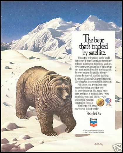 Grizzly Bear Art Chevron PBS Film (1987)
