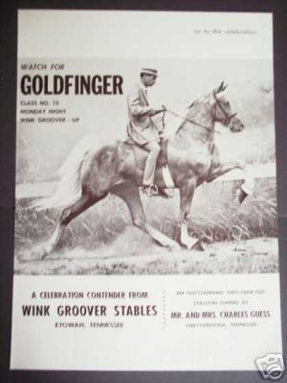 Tennessee Walking Horse Goldfinger Photo Trade (1965)