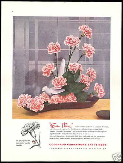 Colorado Carnations Flower Growers Assoc (1954)