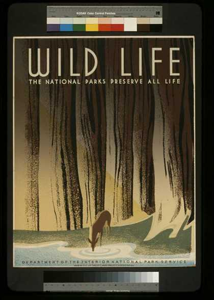 Wild life – The national parks preserve all life. (1936)