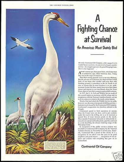 Whooping Crane Bird Continental Oil Co Vintage (1952)