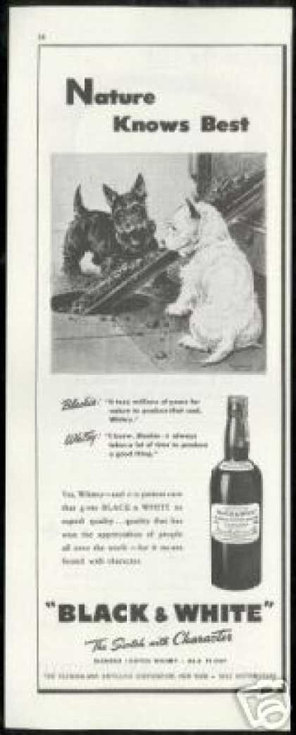 Scottish Terrier Westie Coal B&W Scotch (1946)