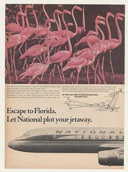 National Airlines to Florida Hialeah Flamingoes (1964)