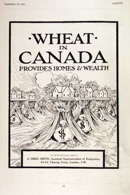 Canadian Wheat Farms (1911)