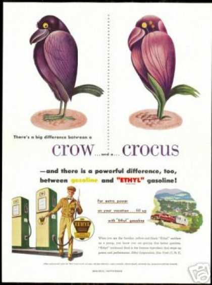 Crow Crocus Art Ethyl Gasoline Vintage (1951)
