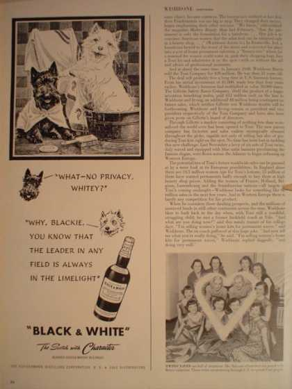 Black and White Scotch Scotty Dogs Scotties (1949)