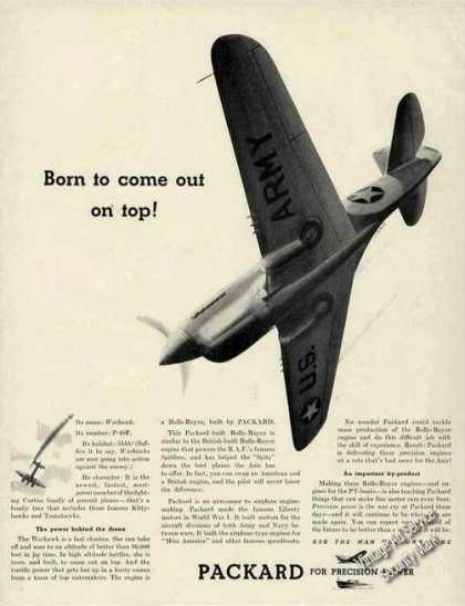 Wwii P-40f Art Packard Warplane (1942)