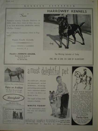 Multiple Pet Boarding ads Harrowby Kennels Lewisfield Arabian Horses Danby Farm (1964)